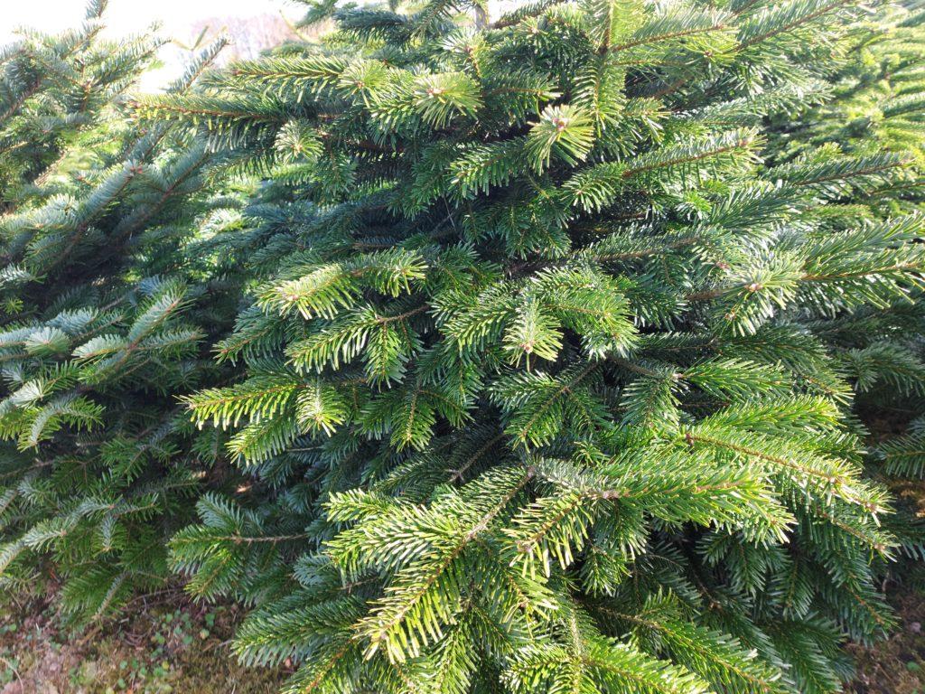 juletræ sortiment