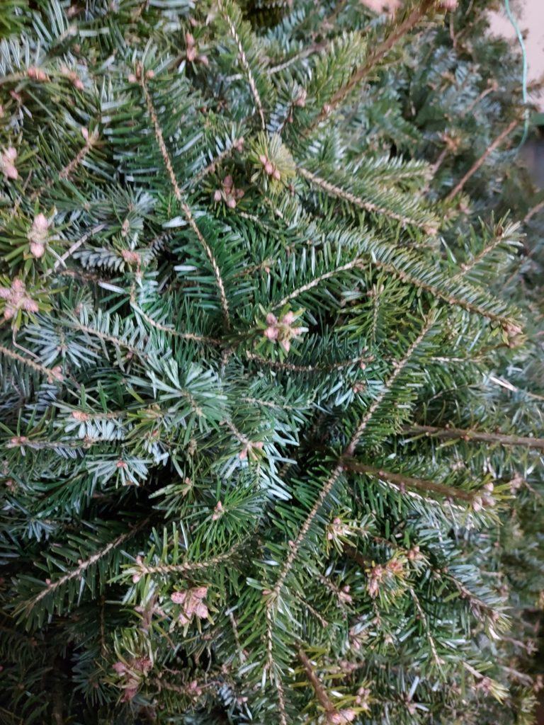 Køb juletræer