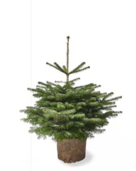 pottede juletræer