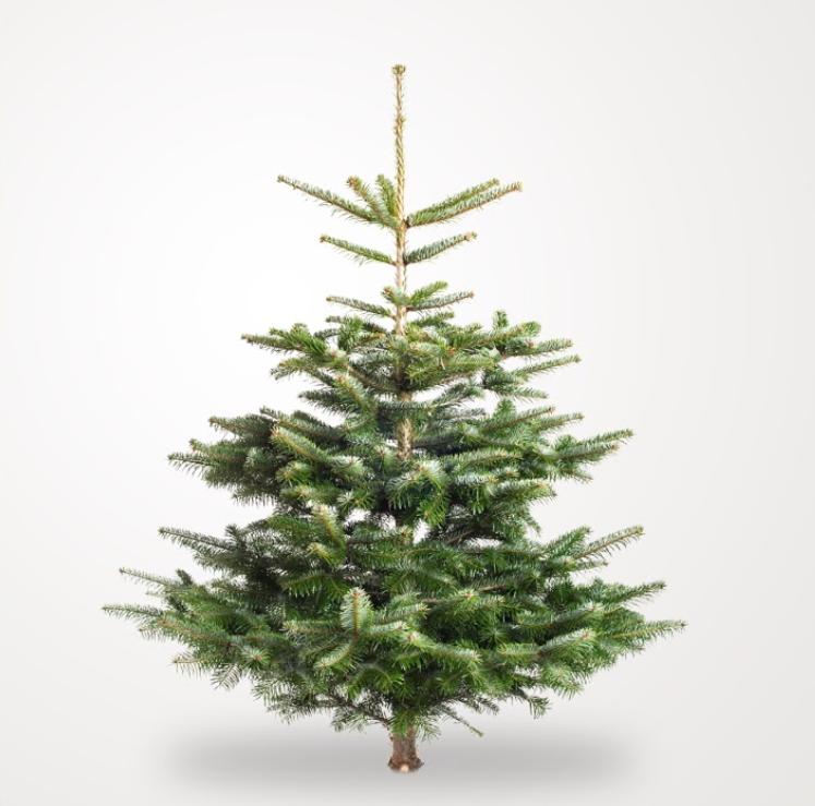 afskårne juletræer